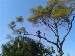 Pro cut tree fellers