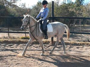 Schooled Pony for sale