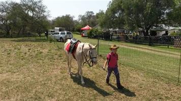 Arab Pony for sale