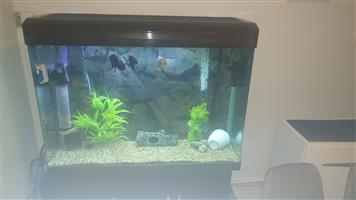 Urgent 400L fish tank unit for sale