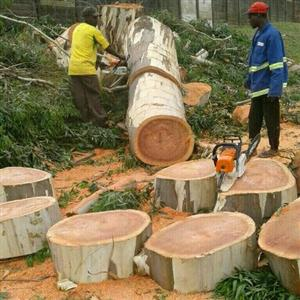 Tree Felling and Project