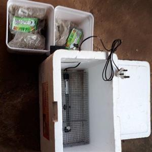 reptile incubation box