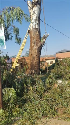 Blue Sky Tree Felling and Maintenance Services
