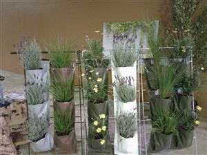 Green Walls - Vertical Wall Gardens - Grow your food on your walls