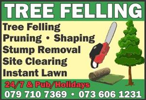 Affordable Tree Felling