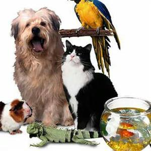 Do you need a pet or house sitter