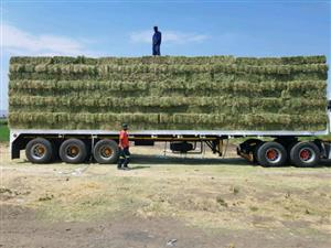 A grade Lucerne Hay Bales for sale Retail and wholesale