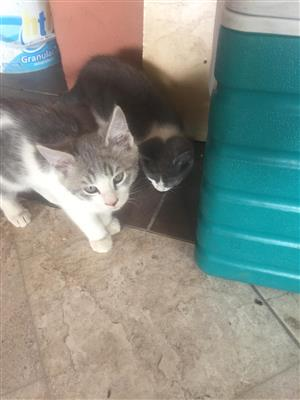 Cute fluffy kittens looking for new homes