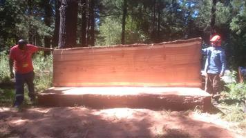 Solid Wood Slabs