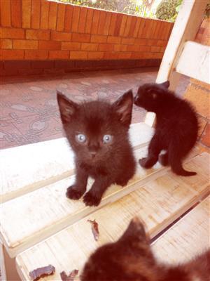 3 x Kittens to loving homes