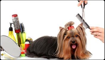 Doggy Parlour For Sale