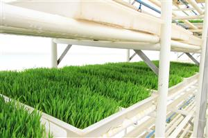 Sprout Booster (Livestock Green feeding unit)