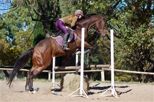 Ideal competition horse