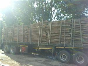Pine pulp timber for sale: