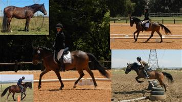 SUPER PONY FOR COMPETITIVE CHILD OR JUNIOR