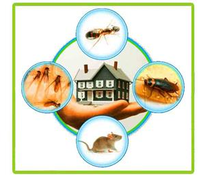 Pest Control for Businesses and Homes