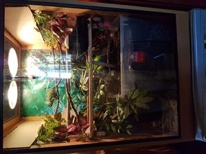 Reptile, Chameleon cage for sale excellent condition
