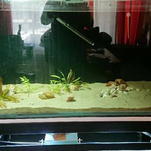 aquarium 750L