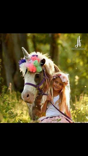 Pony Party rides