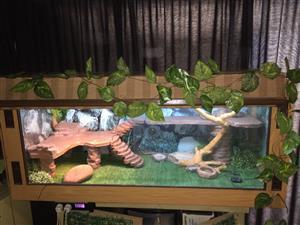 Bearded dragon Reptile vivarium terrarium cage tank
