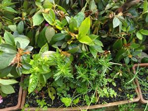 Organically grown herbs in window box for sale