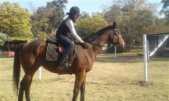R125 per Lesson - Horse Riding For All Ages