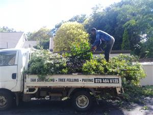 TREE FELLING WITBANK