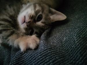 Four female kittens looking for loving homes