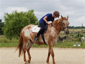 Beautiful Appaloosa Mare for sale