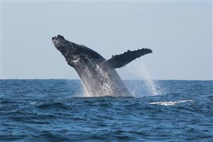 Whale watching tour Durban