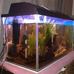 Fishtank 60L with extras