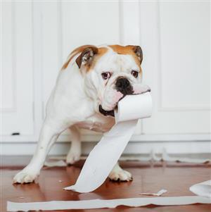 Bismark's World Dog Poop Scoop Services