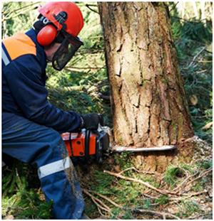 Tree Felling Services 0734421108