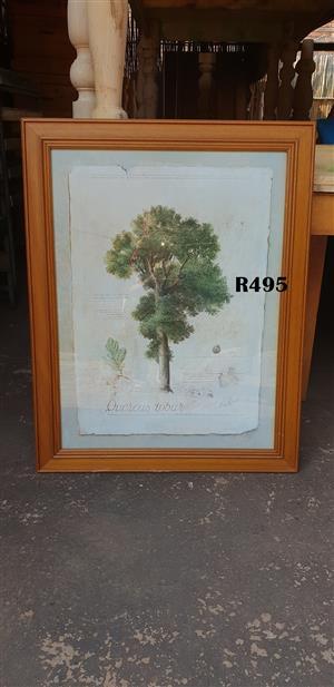 Framed f de Villeneuve Quercus Robus Picture (730x930)