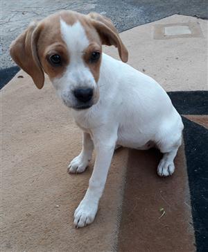 Puppy Needing A home