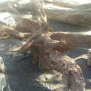 wild olive wood stumps and roots