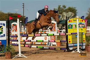 Warmblood mare competing 1.20m for sale