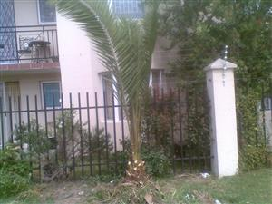 Palm tree (2 meters high) - beautifully trimmed-down more recently for easy transport. Buyer must dig-up, uproot and transport; BARGAIN R150-00, Call Darren Cell: 068 059 7574