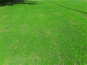 Instant lawn, grass