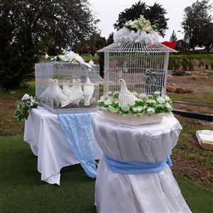White Doves for Hire Cape Town all Events