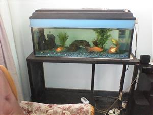 Fish tank with stand (Can store three different size fish tanks on one stand)