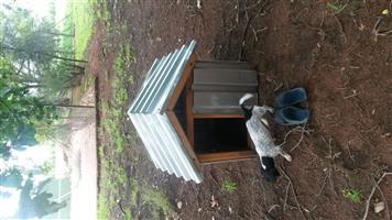 Bargain dog kennel