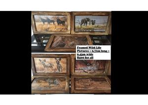Framed Wild Life Pictures – 0,72m long – 0,43m wide