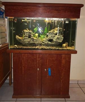 Large Aquarium for Sale R3000