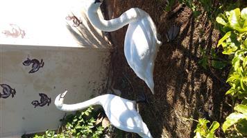 Pair Mute swans