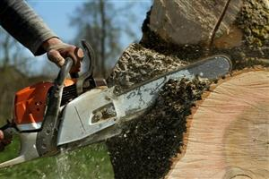 Tree cutting & cleaning