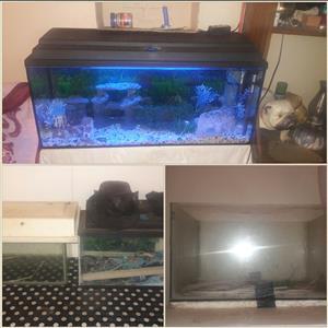 Fish tanks for sale/ Vistanks tekoop