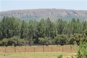 Vacant land at Kameeldrif West.