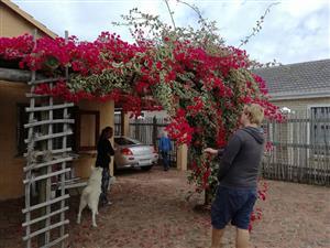 Pet Friendly House in Kleinkrantz, 100m From Beach