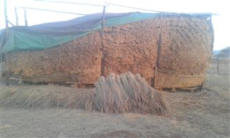 thatch grass 2 for sale